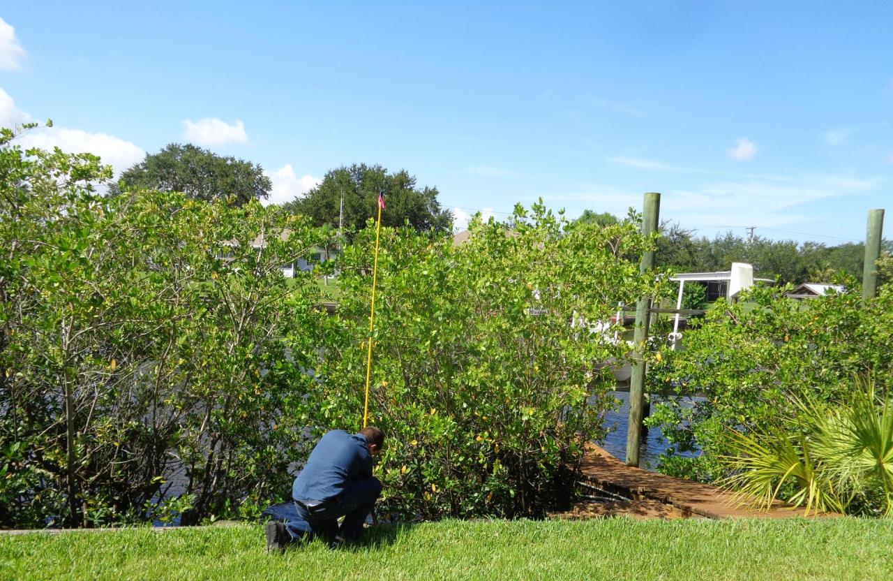 Mangrove measurements